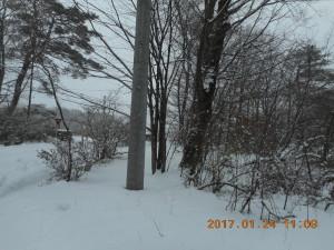 H290124雪 (6)