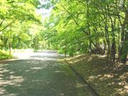 豊かな樹々に囲まれた静寂な住環境No.135